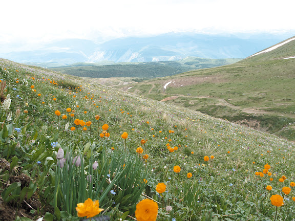 Prairies alpines (2500 m) au-dessus d'Aktash. 9 juillet 2010. Photo : J. Marquet