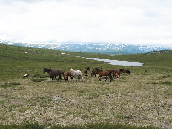 Au bord du lac Ozero Bezimyannoe (Chibitka ?) (2150 m) dans les Monts Severo-Chuyskij (au nord d'Aktash). 12 juillet 2010. Photo : J. Marquet
