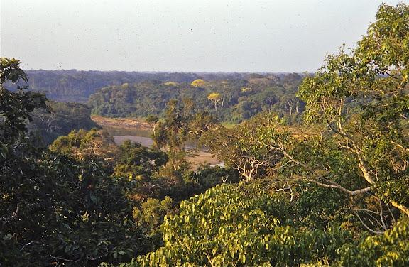 La Tambopata et la canopée à Pousada Amazonas, août 2004. Photo : J.-M. Gayman