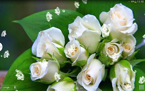 白玫瑰 動態桌布