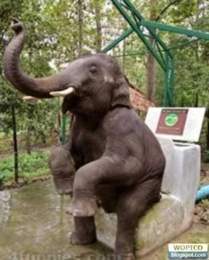 Wonderful Pictures Collection 2 Elephant Toilet