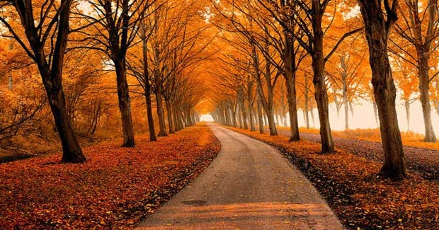 fall autumn amazing goor lars van nature stunning cool season colors landscape creative incredible glazemoo road honest logos trees foliage