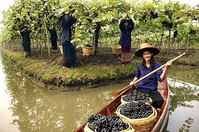 siam winery floating vineyard