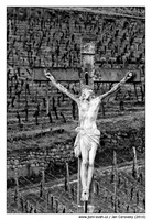 Vinice kříž | Vineyard Jesus Christ on the cross