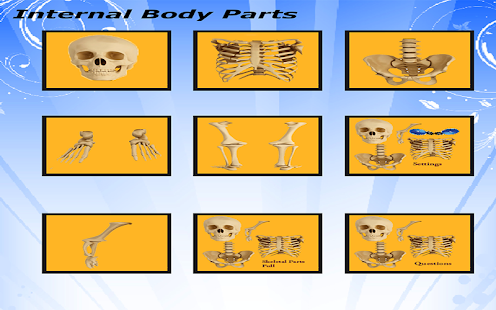 Body Parts - Skeletal System - náhled