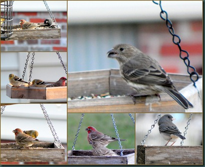 finch-junco collage