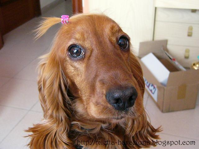 Mi querida perrita Linda (Моя любимая собака Линда)