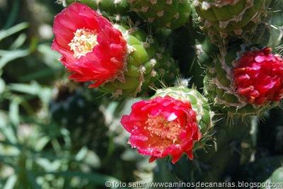 1278 Artenara-Acusa(Cactus de Mexico)