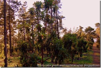 2020 Bosque Faya-Brezal(Madroños)
