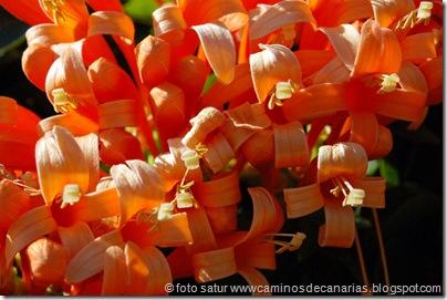 2094 Valsequillo-Valle San Roque(Trompetero naranja)