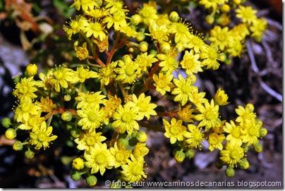 2563 Cascajales-Valsequillo(Bejequillo canario)