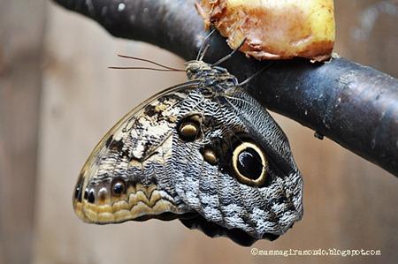 Butterfly Arc La Casa Delle Farfalle