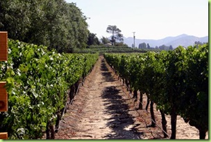 Vineyard%20at%20concha%20y%20toro