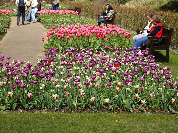 Obiective turistice Olanda: Keukenhof