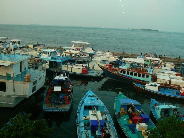 Imagini Maldive: langa piata de peste.JPG