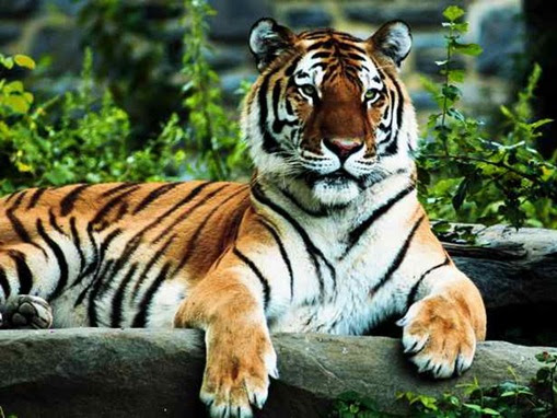 myselebrity: Top 10 Lists Most Endangered Species on Earth