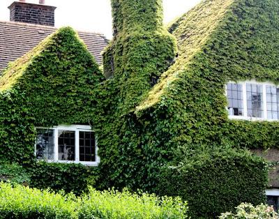 房子在汉普斯特德覆盖着常春藤花园在伦敦郊区