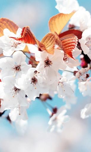玩免費個人化APP|下載Spring Live Wallpaper app不用錢|硬是要APP