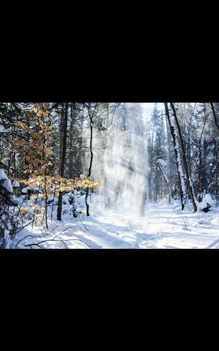 Hd Images Snowfall Forest LWP