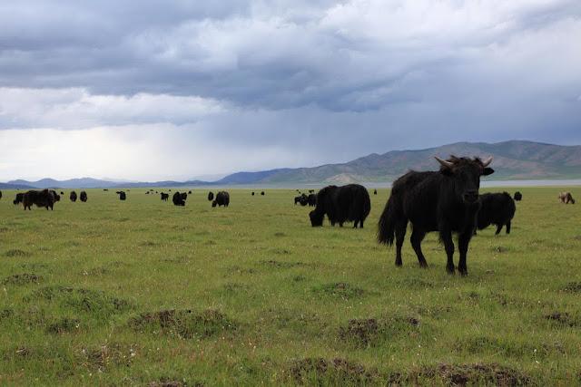W. Mongolia 071.jpg