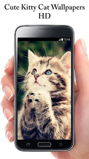 可愛的貓背景