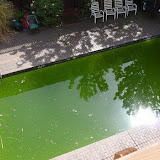 greenswimmingpool713936av3.jpg