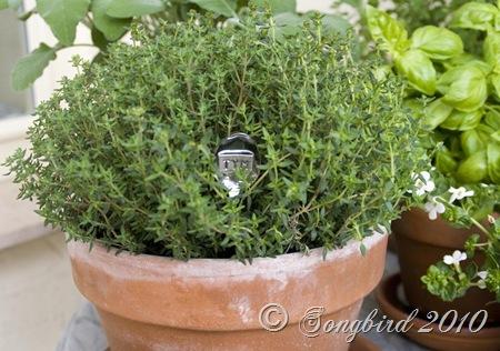 Herb Garden3
