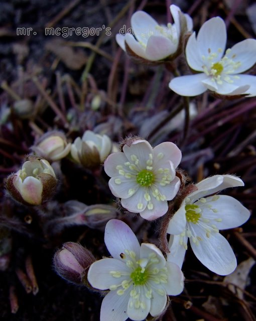 A Wildflower for All Seasons: Wildflower Wednesday