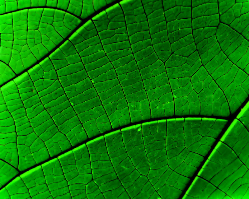 green leaf plant wallpapers