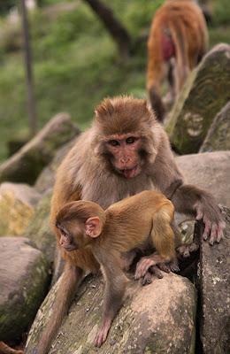 monkey 0771
