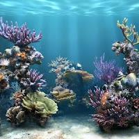 400_1184918422_arrecife.jpg