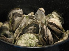steamed-oysters