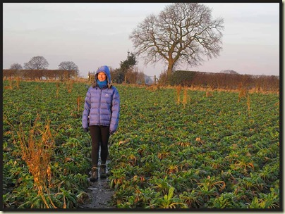 Sue follows an icy path through a field of beet