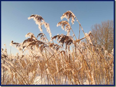 Hoar frost adorned the grasses lining the canal