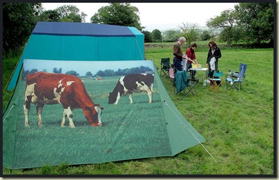 Cows are allowed on the campsite?