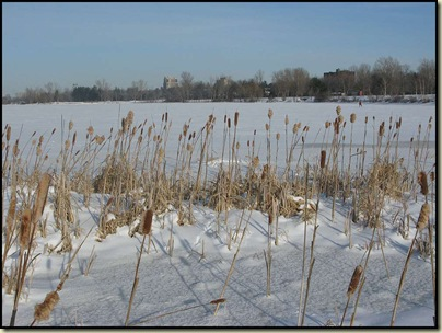 The Ottawa River near Westboro - 24/1/11