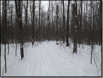Back country trail 9 in Gatineau Park
