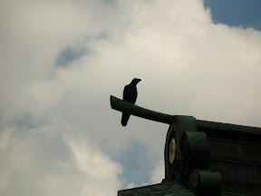 012 - Un cuervo más.JPG