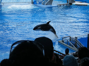 087 - Espectáculo de las orcas.JPG