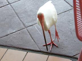 070 - El pájaro escoba.JPG