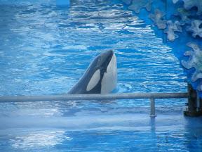083 - Espectáculo de las orcas.JPG