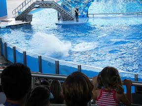 118 - Espectáculo de las orcas.JPG