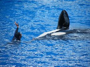 093 - Espectáculo de las orcas.JPG