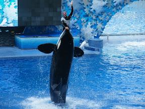 094 - Espectáculo de las orcas.JPG