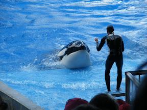 102 - Espectáculo de las orcas.JPG
