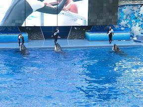 124 - Espectáculo de las orcas.JPG