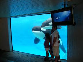 136 - Orcas.JPG