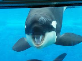 140 - Orcas.JPG