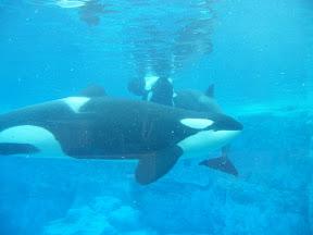 148 - Orcas.JPG