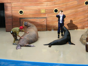 206 - Espectáculo de los leones marinos.JPG